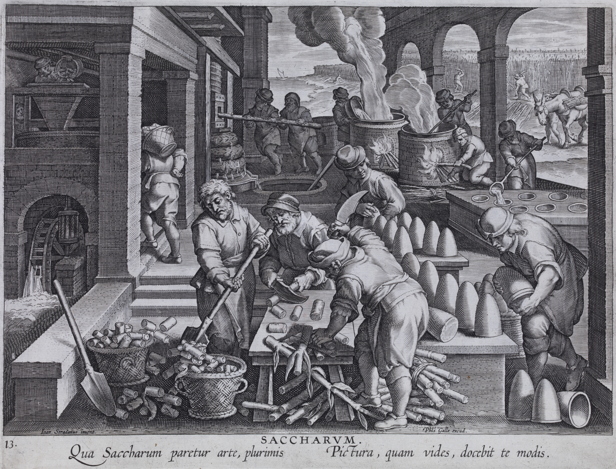 'Saccharum' print showing the sugar production process, c. 1580–1605